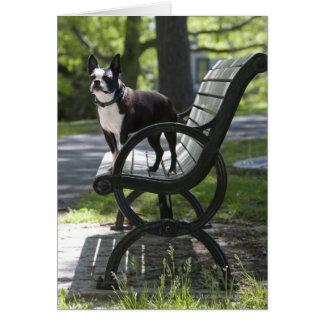 Boston Terrier Tarjetón