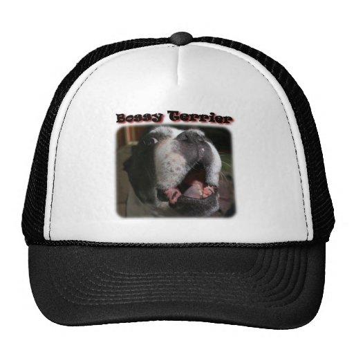 Boston Terrier:  Terrier mandón Gorras