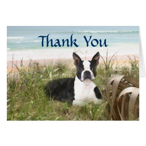 Boston Terrier Thank You Card Beachgrass