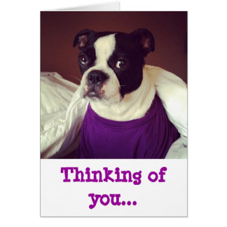 Boston Terrier-Thinking Of You Greeting Cards