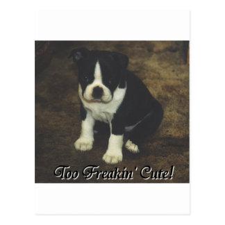 Boston Terrier:  Too Freakin' Cute Postcard