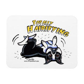 Boston Terrier totalmente Hairifying Imanes Rectangulares