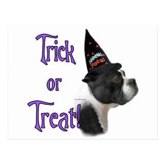 Boston Terrier Trick Postcard