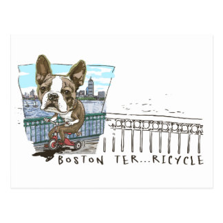 Boston Terrier Tricycle Postcard