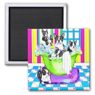Boston Terrier Tub Full 2 Inch Square Magnet