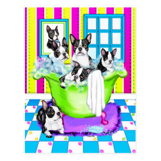 Boston Terrier Tub Full Postcard