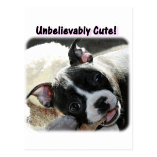 Boston Terrier:  Unbelievably Cute! Postcard