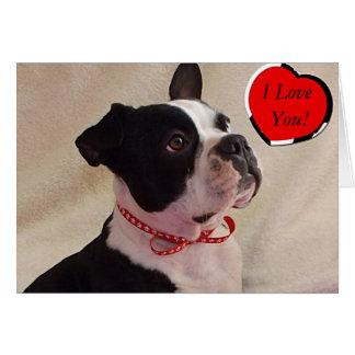 Boston Terrier Valentine Card