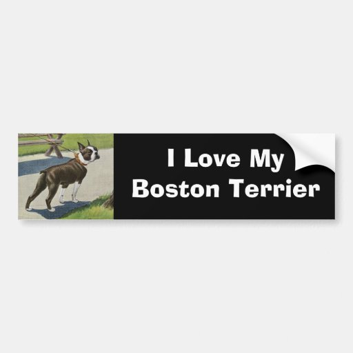 Boston Terrier Vintage Bumper Sticker Car Bumper Sticker