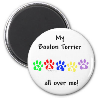 Boston Terrier Walks All Over Me - Magnet