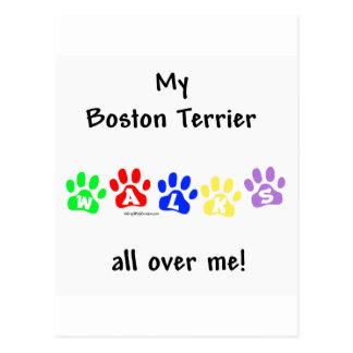 Boston Terrier Walks All Over Me Postcard
