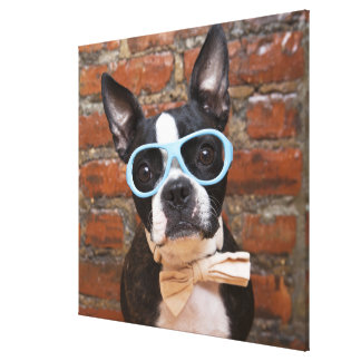 Boston Terrier Wearing Sunglasses And A Bow Tie Canvas Print