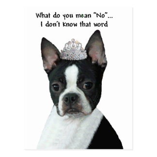 "Boston Terrier:  What Do You Mean ""No""? Post Cards"