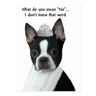 "Boston Terrier:  What Do You Mean ""No""? Postcard"