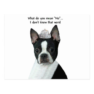 "Boston Terrier:  What Do You Mean ""No""? Postcard"
