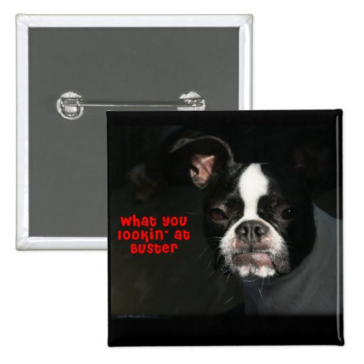 Boston Terrier:  What you lookin' at Buster! 2 Inch Square Button