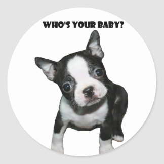 Boston Terrier:  Who's Your Baby? Classic Round Sticker