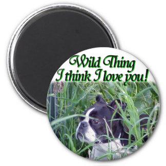 Boston Terrier:  Wild Thing Magnet