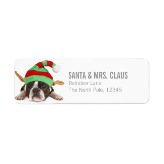 Boston Terrier With A Christmas Hat Label