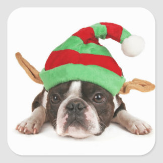 Boston Terrier With A Christmas Hat Square Sticker