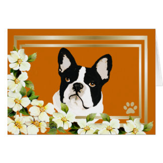 Boston Terrier with Dogwood Flowers Card