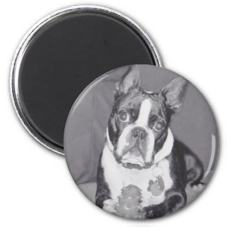 Boston Terrier with Kong toy Magnet