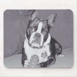Boston Terrier with Kong toy Mouse Pad