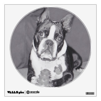 Boston Terrier with Kong toy Wall Sticker