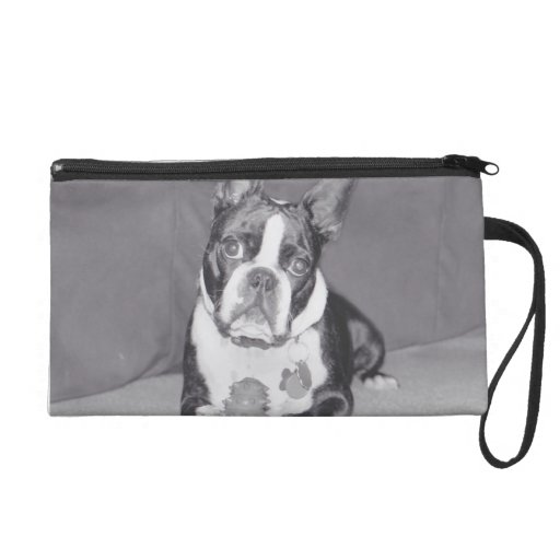 Boston Terrier with Kong toy Wristlets