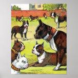 Boston Terrier y ejemplo del vintage de los perrit Posters