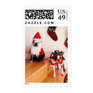 Boston terriers in Christmas costumes Postage