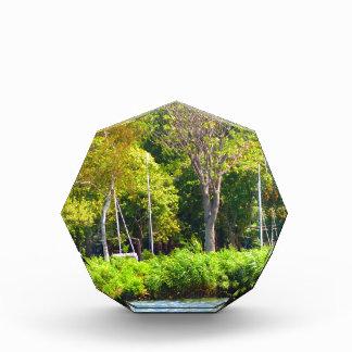 Boston USA America  Green Nature Photography Award