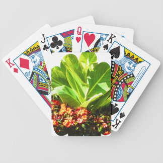 Boston USA America  Green Nature Photography Bicycle Playing Cards