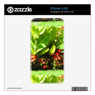 Boston USA America  Green Nature Photography iPhone 4S Decals