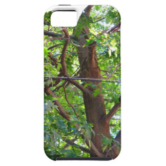 Boston USA America  Green Nature Photography iPhone SE/5/5s Case