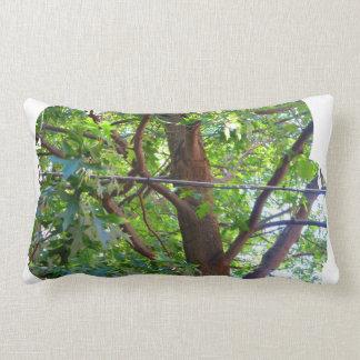 Boston USA America  Green Nature Photography Lumbar Pillow