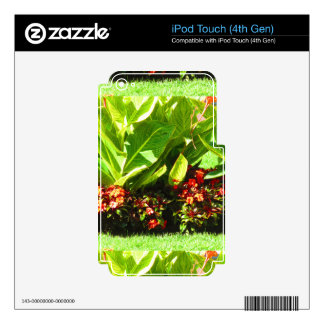 Boston USA America  Green Nature Photography iPod Touch 4G Decal