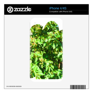 Boston USA America  Green Nature Photography Skins For iPhone 4S