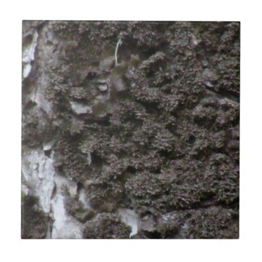 Botánica de la planta de la seta del musgo de los  azulejo cuadrado pequeño