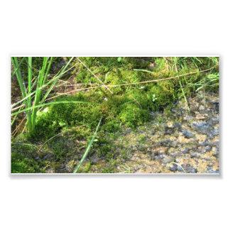 Botánica de la planta de la seta del musgo de los  fotos