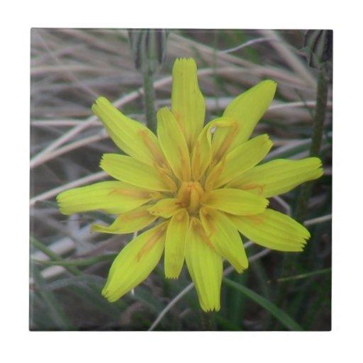 Botánica de las flores de los Wildflowers de la fl Tejas