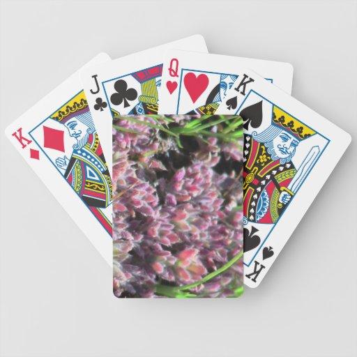 Botánica de las flores de los Wildflowers de la fl Baraja