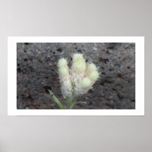 Botánica de las flores de los Wildflowers de la fl Poster