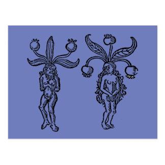 Botánica: Mandrake, 1476 Tarjetas Postales