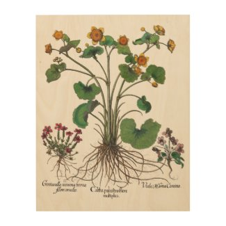 Botanical Art of Basilius Besler Wood Wall Art