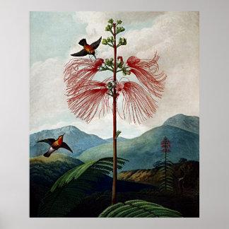 Botanical Art Temple Of Flora Sensitive Plant Poster