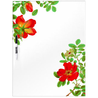 Botanical Cabbage Rose Flowers Floral Dry Erase Board
