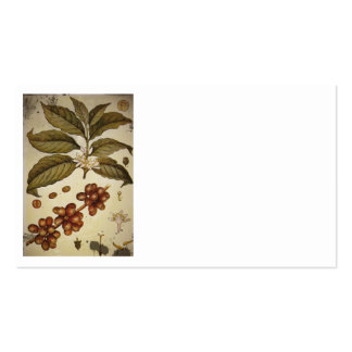 Botanical Drawing of Coffee Plant Business Card