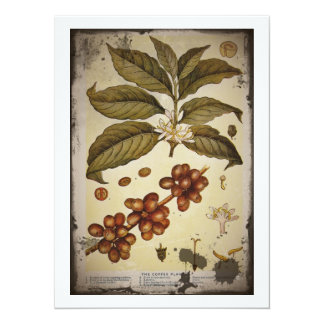 Botanical Drawing of Coffee Plant Card