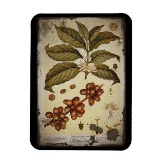 Botanical Drawing of Coffee Plant Rectangular Photo Magnet